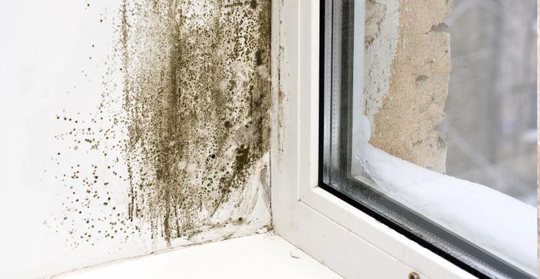 Quel est le traitement d'humidité adapté