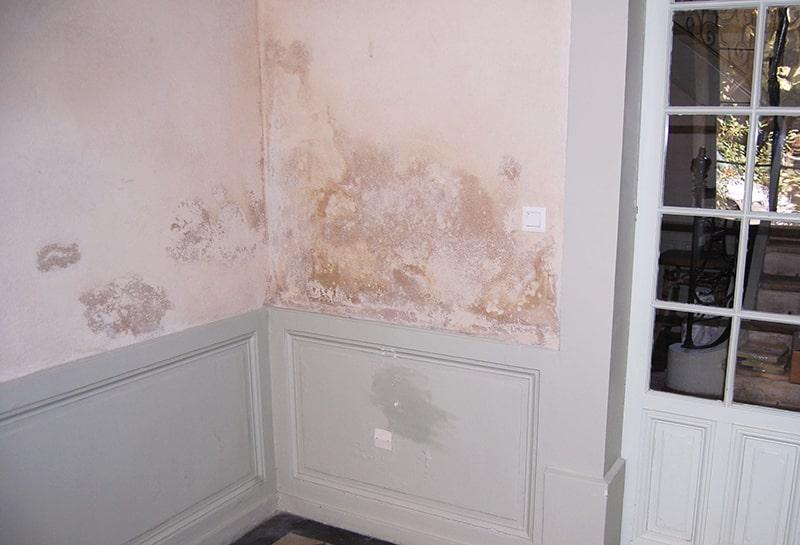 Moisissure sur les murs : les causes et comment l'enlever