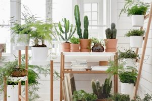 Plantes vertes anti condensation