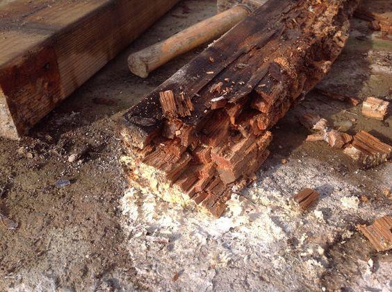 bois rongé par le champignon